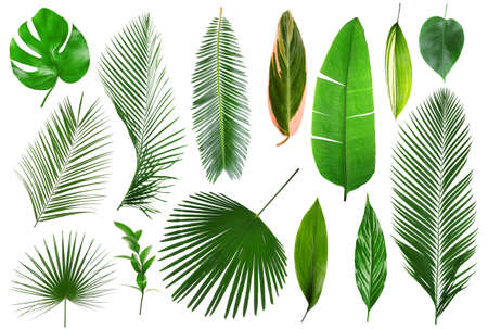 Different tropical leaves on white background Фото со стока - 91469898
