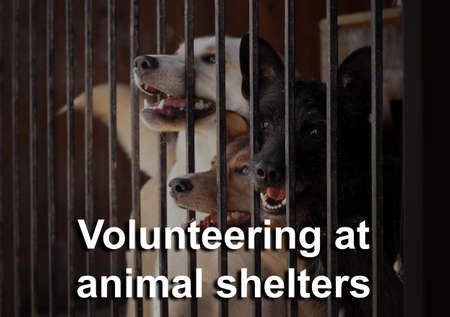 Concept of volunteering at animal shelters. Homeless dogs in cage outdoor