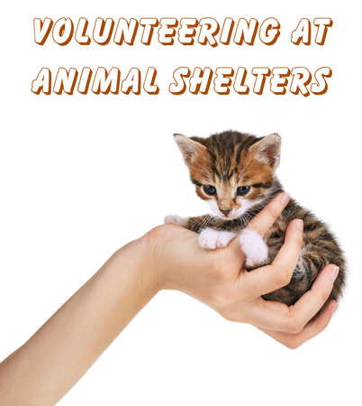 Concept of volunteering at animal shelters. Woman holding kitten in hand on white background Stock Photo