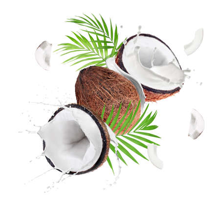 Coconuts and milk splashes on white background