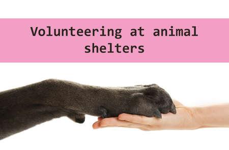 Concepto de voluntariado en refugios de animales. Pata de perro y mano femenina sobre fondo blanco