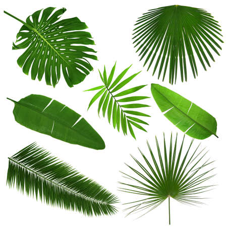 Different tropical leaves on white background 版權商用圖片 - 91436820