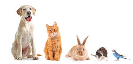 Funny pets on white background Standard-Bild