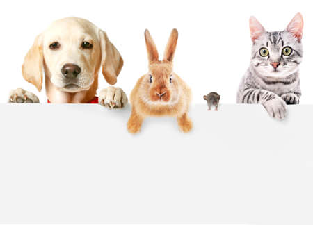 Funny pets on white background