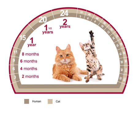 Pet age concept. Comparison chart of cat and human years on white background