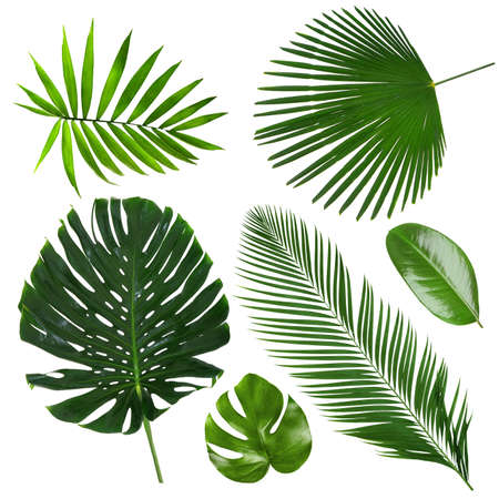 Different tropical leaves on white background 版權商用圖片 - 91441082