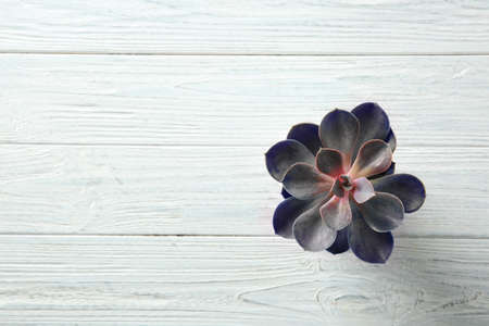 Beautiful succulent on wooden background