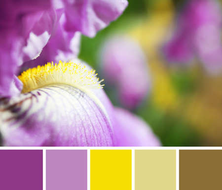 Lilac color matching palette. Beautiful flower, closeup