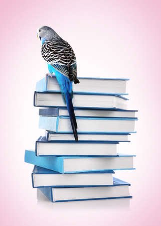 Back to school concept. Cute parrot sitting on top of book stack against color background 版權商用圖片