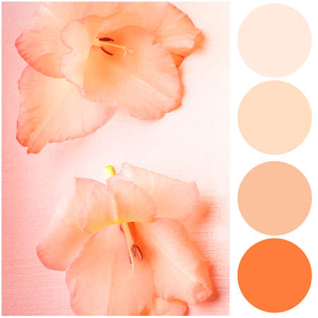 Apricot color matching palette. Beautiful flowers on textured background