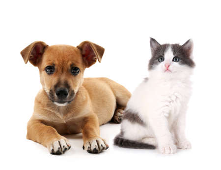 Cute kitten and puppy together on white background