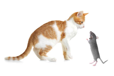 Cute cat and mouse on white background