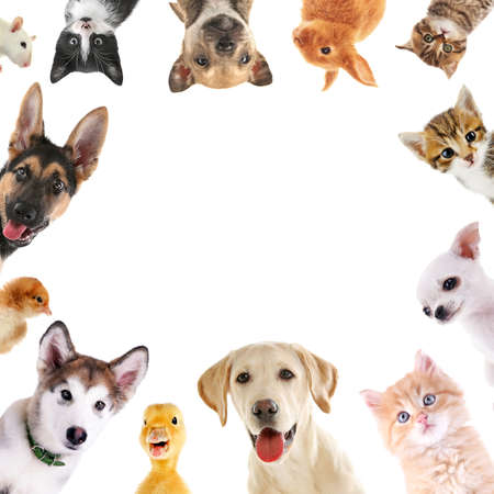 Collage of cute baby animals on white background 版權商用圖片