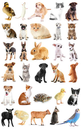 Collage of cute baby animals on white background