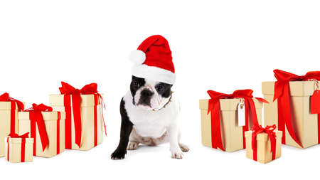 Cute dog in Santa hat and gifts on white background. Christmas and New Year 2018 celebration