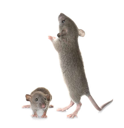 Little mouse with mother on white background