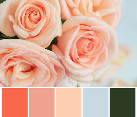 Palette with salmon color and beautiful flowers, closeup