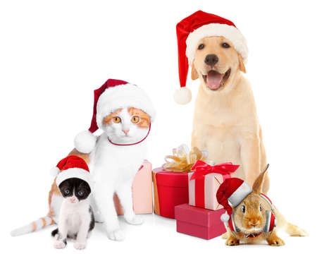 Funny pets in Santa hats with Christmas gifts on white background