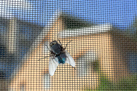 Vlieg op het vensterscherm, close-up Stockfoto