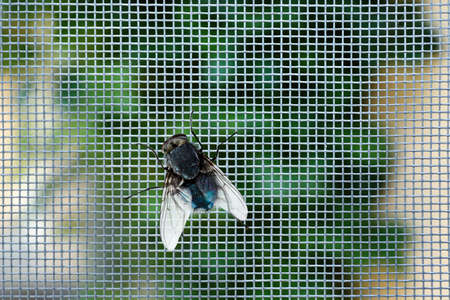 Fly on window screen, closeup Stock Photo - 92271862