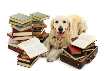 Portrait of Labrador with pile of books isolated on white Reklamní fotografie - 92730076