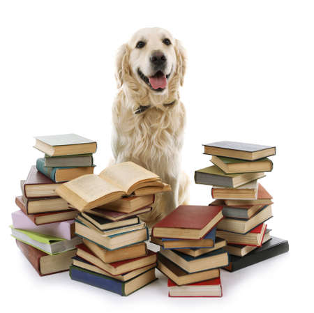 Portrait of Labrador with pile of books isolated on white