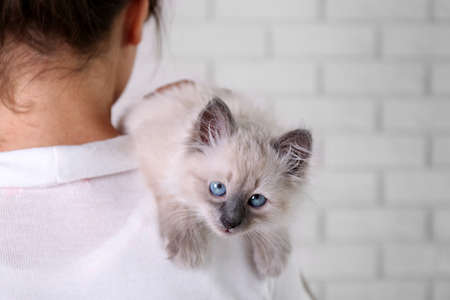 Young woman holding cat on light wall background Stock Photo