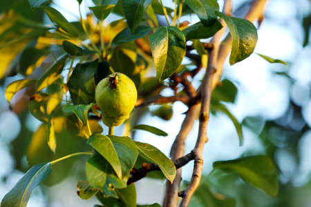 Beautiful spring leaves with fruits on tree outdoors 写真素材