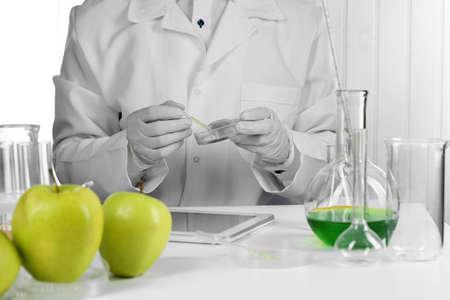 Scientist examines apples in laboratory Stock Photo