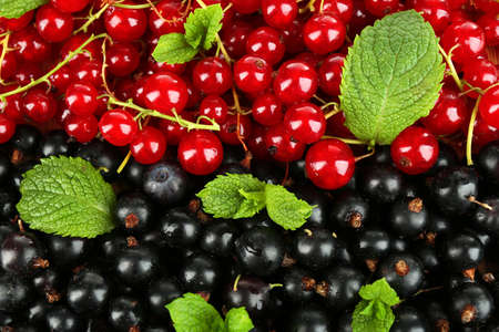 Ripe red and black currant background