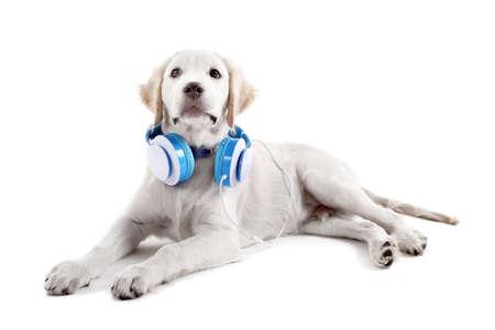 Leuke die Labrador met hoofdtelefoons op wit wordt geïsoleerd