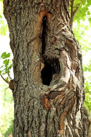 Holle dichte omhooggaand van de boom Stockfoto - 93864541