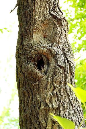 Tree hollow close up Stock Photo