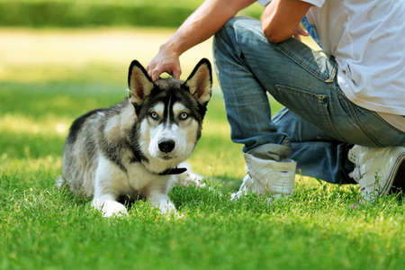 Young man with beautiful huskies dog in park Stock Photo
