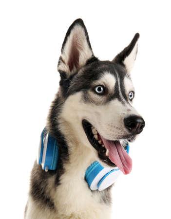 Bello cane dei husky con le cuffie isolate su bianco Archivio Fotografico - 93721737