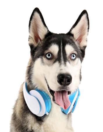 Bello cane dei husky con le cuffie isolate su bianco Archivio Fotografico - 93722409