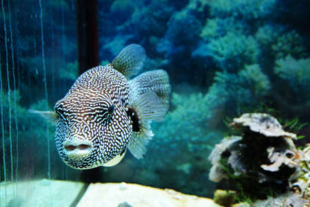 Underwater world - exotic fish in an aquarium Stock Photo