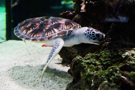 Underwater world - sea turtle in an aquarium Stock Photo