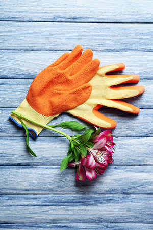 Beautiful composition of flower and garden gloves on blue wooden background Stock Photo