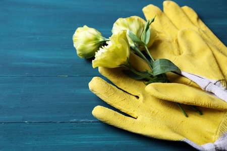Blossom and gloves on painted wooden background Stock Photo