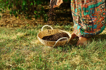 Woman spills coffee beans in the basket on the ground
