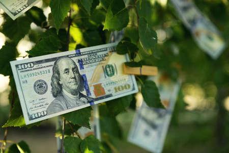 木の上に100ドル紙幣、屋外 写真素材