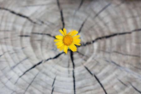 Het mooie bloemzaailing groeien in de centrumboomstam als concept het nieuwe leven Stockfoto