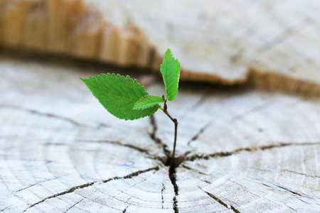 Mooie zaailing groeit in de middenstam als een concept van nieuw leven