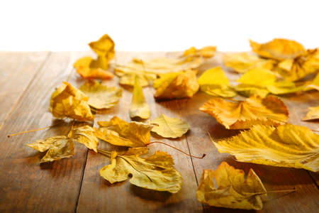 Yellow autumn leaves on wooden table, isolated on white Stock Photo