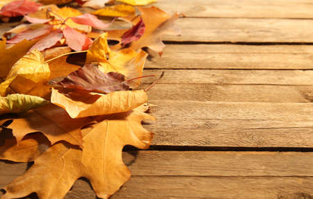 Yellow and brown autumn leaves on wooden background Stock Photo