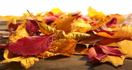 Yellow and brown autumn leaves on wooden table, isolated on white
