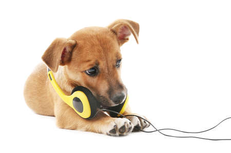Puppy playing with headphones isolated on white Stock Photo