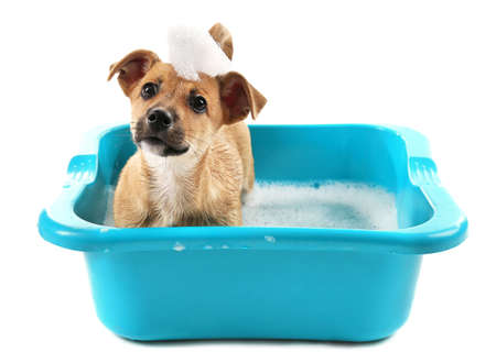 Puppy in bath isolated on white Stok Fotoğraf