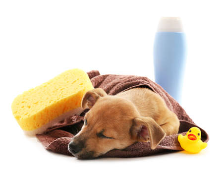 Puppy sleeping wrapped in towel isolated on white